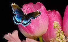Tulipe, Fleur, Papillon, Nature, Fleurs, Vert, Lilas