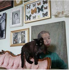 Cheap Home Decor hai__hailey .Cheap Home Decor hai__hailey Coraline, Oui Oui, Cat Lady, Animal Crossing, Cute Cats, Fur Babies, Cute Animals, Artsy, Creatures