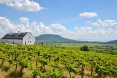 Image 3 of 24 from gallery of Winery in Balaton Highland / SAGRA Architects. Photograph by Sajtos Gábor Places Around The World, Around The Worlds, Wine Cellar Design, Wine Country, Hungary, Budapest, Wines, Vineyard, Gallery