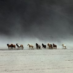 Saw wild horses running through the Nevada desert just like this when I was riding in the family car as a child.