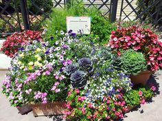 These kind if impromptu Container Gardens cover Epcot Center during the International Flower and Garden Festival! Garden Ideas Inspired by Epcot Center - GO MOM!