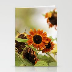 Set of folded stationery cards printed on bright white, smooth card stock to bring your personal artistic style to everyday correspondence.  Each card is blank on the inside and includes a soft white, European fold envelope for mailing.  #sunflowers,#card