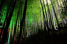 高台寺 ~京都の紅葉 Kodaiji Temple,Kyoto