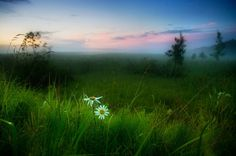 Dawn in a meadow
