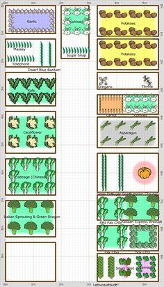 Autumn/Winter Vegetable Garden 2014