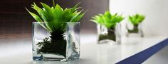 8 Benefits Of Plants In The Office