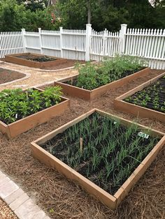Backyard Vegetable Gardens, Veg Garden, Vegetable Garden Design, Garden Beds, Farm Gardens, Outdoor Gardens, Jardin Decor, Market Garden, Dream Garden