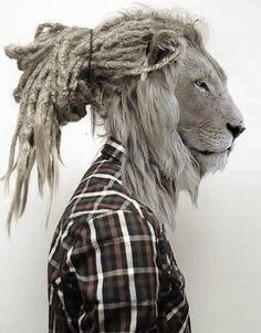 rasta lion of Zion gwwan fa natty. now its dread time. Photomontage, Rasta Lion, Tier Fotos, Animal Heads, Photo Manipulation, Belle Photo, Pet Portraits, Lions, Illustration