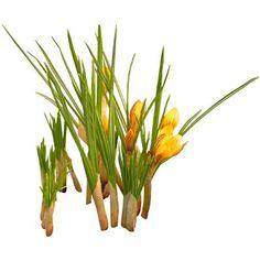 Крокусы - весна cutout flowers: crocus