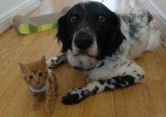 What a #heartwarming duo! #cat #dog #adorable #pets #socute