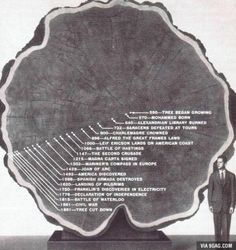 Tree rings showing historical dates in time - www.galactic-stone.com