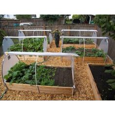 Raised beds with greenhouses