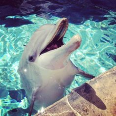 .  - Stop the Dolphin and Orca Slaughter NOW