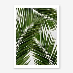 Noir Gallery Beach Coastal Palm Tree Leaf Canvas Wall Art Print x