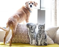 Pet Pillows via Yellow Brick Home.   I need to do this. After boy cat left scratches all over my arm last night, I'd love a non-clawed version.