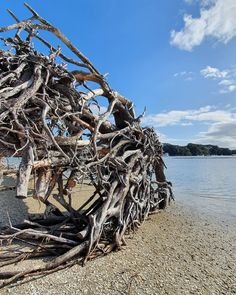 Tangled roots on a beach 🤔 . Location: Tahawai Beach, Katikati, New Zealand . #goodvibesnz #purenewzealand #gottalovenz #newzealandtrip #newzealandlife #newzealandpics #newzealandtravel #discovernewzealand #newzealandphotography #nzphotography #newzealandguide #newzealandfinds #newzealandtourism #wonderful_places #exploringnewzealand #lovelynewzealand #newzealandvacations #divine_worldplaces #awesome_phototrip #hello_worldpics #travelanddestinations #earth_superior #ourakl #nzmustdo… E Photo, New Zealand Travel, Wonderful Places, Tangled, Mount Everest, Roots, Tourism, Fair Grounds, Earth