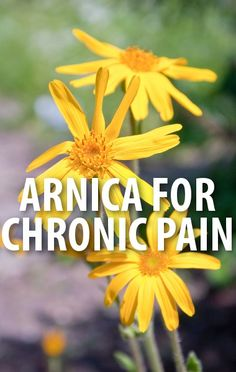 Dr. Oz explained what causes chronic pain and natural ways you can find relief. http://www.recapo.com/dr-oz/dr-oz-advice/dr-oz-chronic-pain-arnica-gel-ice-massage-probiotics-omega-3s/