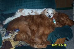 Cissy and Katie...snugglebuddies