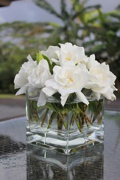 Gardenias from the garden - the classiest flower that smells gorgeous