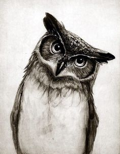 Art Prints featuring Owl Sketch by Isaiah K. Art Sketches, Art Drawings, Drawing Art, Awesome Drawings, Amazing Artwork, Animal Sketches, Beautiful Artwork, Buho Tattoo, Tattoo Owl