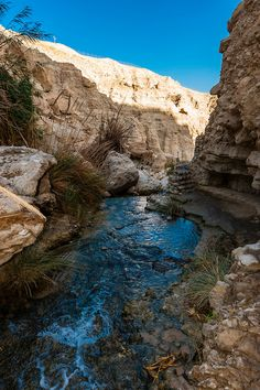 En Gedi Nature Reserve near the Dead Sea, ISRAEL