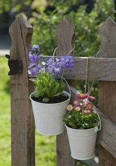 Image detail for -Primrose (Primula denticulata) and Daisy (Bellis perennis) in white pots, hanging from a wooden garden gate, focus on foreground, close-up, UK Wooden Garden Gate, Garden Gates, Garden Art, Garden Design, Beautiful Gardens, Beautiful Flowers, Bellis Perennis, Pot Jardin, Garden Cottage