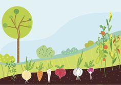 Kitchen garden website