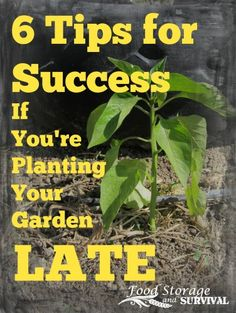 6 Tips for Success if You're Planting Your Garden Late - Food Storage and Survival