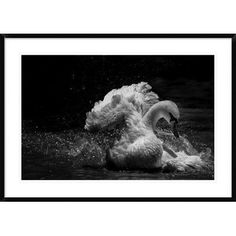 Global Gallery 'In Motion' by C.S. Tjandra Framed Photographic Print Size: