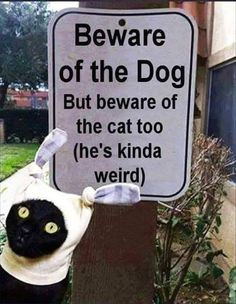 """LMAO..I love crazy cats. Something Is Wrong About That """"Dog """" There..Just makes me laugh out loud. LOL"""