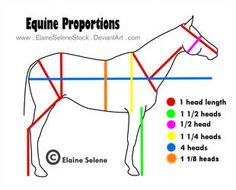 This is just a diagram for general equine anatomy. UPDATED I: I was surprised by how popular this got. So I updated it to make it more accurate. I did trace the horse outline directly from/over a p. Horse Drawings, Animal Drawings, Anatomy Reference, Art Reference, Horse Nail Art, Head Proportions, Horse Sketch, Horse Anatomy, Animal Anatomy