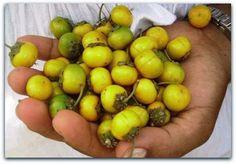 Murici (Byrsonima sericea)  Existem vários tipos de Murici, a maioria de pequeno porte e típicos do cerrado.   Esta espécie é uma árvore de médio porte, da Mata Atlântica, com cacho de flores amarelas. Normalmente floresce em Novembro.