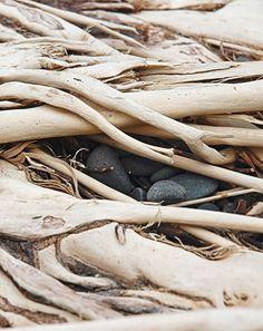 Nautilus Driftwood Design