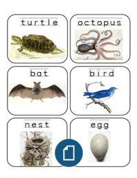 Animal Handwriting Word Cards