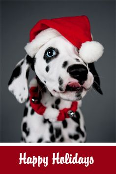 Dalmatian Merry Happy Christmas Day Card Puppy Holiday Dogs Santa Claus Dog Puppies Xmas #MerryChristmas