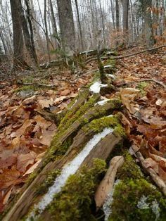 Bois Blanc Island Michigan