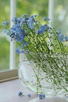 fresh blue arrangement (paulacorrea1)