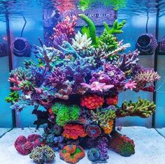 Coral Reef Aquarium, Saltwater Aquarium Fish, Saltwater Tank, Marine Aquarium, Nano Reef Tank, Reef Tanks, Seahorse Tank, Reef Aquascaping, Amazing Aquariums