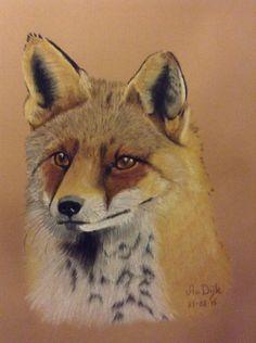 Fox Pastelpotlood