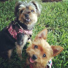 Lulah and Lilah ❤❤