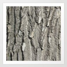 Collect your choice of gallery quality Giclée, or fine art prints custom trimmed by hand in a variety of sizes with a white border for framing. Tree Bark, Design Trends, Fine Art Prints, Gallery, Wood, Frame, Artwork, Crafts, Inspiration