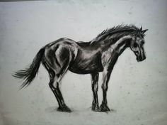 The beauty of power  #charcoal #drawing #art #horse #power