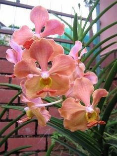 Vanda orchid.  Many to see as tour CR from Jaco beach condo at www.condoincr.com