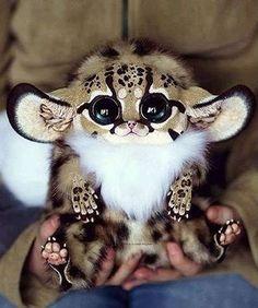 Hotels-live.com/cartes-virtuelles #MGWV #F4F #RT Cute Inari Fox via @wonderful.globe Tag your friends below #animalglobe to be featured! by animalglobe https://www.instagram.com/p/BEA5ZRvrBE6/