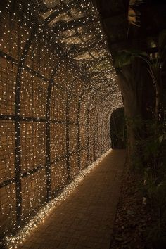 Decoração de casamento - túnel de luzinhas na entrada da festa ( Foto: Cissa Sannomiya )