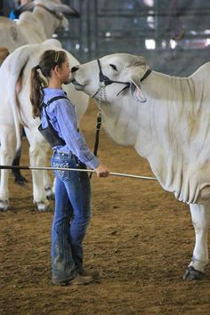 De Gothberg Farms  Awww...a girl and her show stock! Thanks @louisianabrahamanassociation for the share.