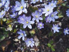 so cute flowers!