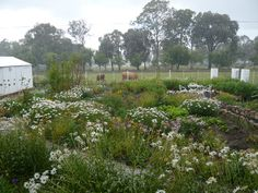Our misty Rosendal country garden with wild flowers. Wild Flowers, Beautiful Places, Gardens, Country, Plants, Rural Area, Country Music, Planters, Rustic