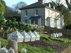 Cloches in an English garden. Love the cloches so pretty