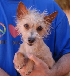 Jewel, adorable young girl who survived cruelty and abuse, now triumphantly debuting for adoption at Nevada SPCA... http://nevadaspca.blogspot.com/2014/05/love-me-and-keep-me-safe-from-violence.html